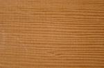 Sample of Fir Wood