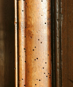 Real woodworm holes in an antique French Armoire.
